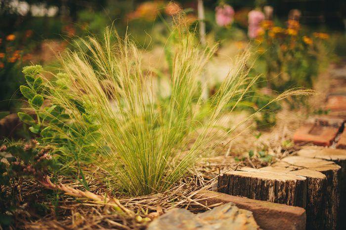 Okrasné trávy vnesú do záhonu dynamiku a navodia pocit voľnosti.