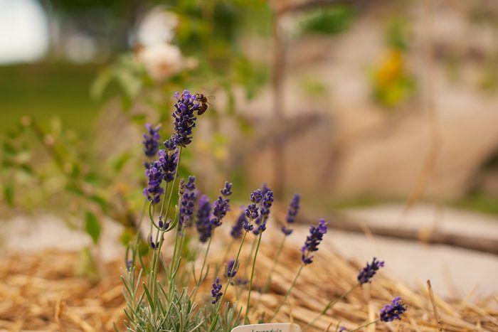 Kvety potrebujú dobré topánky – črepníky, záhony a iné krásne a efektné miesta na posadenie. Potrebujú tiež obliecť, napríklad do slameného svetra.