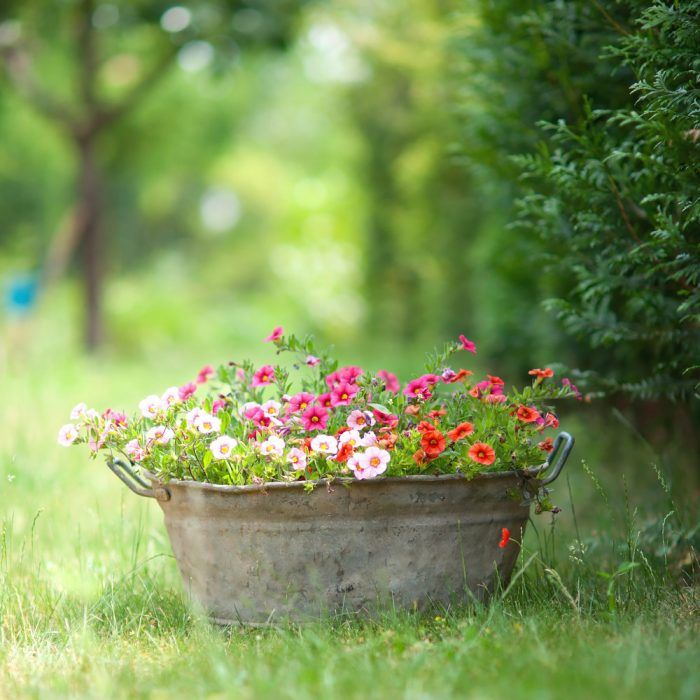 Súčasťou záhrad sú i rôzne staré predmety, ktoré sa do záhrady viac či menej hodia.