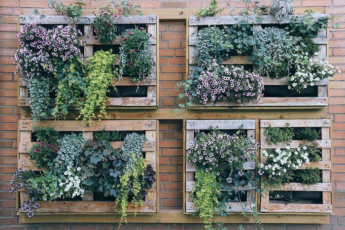 Rastliny, hlavne sezónneho charakteru, môžete pestovať aj netradičným spôsobom – v paletách. Nezaberie to veľa miesta a záhrada získa zaujímavý pohľadový prvok. Výsadbu môžete každoročne meniť. Ak milujete bylinky, neváhajte!