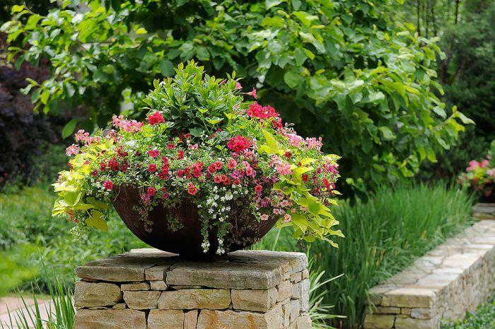 V nádobe Ako sústrediť množstvo pekných rastlín na malom mieste. Stačí ich vysadiť do vegetačnej nádoby. Konečný efekt je väčšinou výborný. Navyše, nádobu môžete premiestňovať podľa potreby. Bolo by toto možné s už vysadenými rastlinami na záhonoch