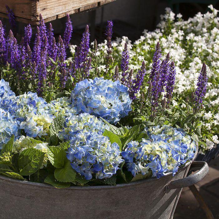 Staré hrnce, košíky či plechové vaničky sú vhodnou alternatívou, keď je nedostatok nádob na vysádzanie. Nakúpené rastliny do nich jednoducho zoskupte (aj bez vysádzania).