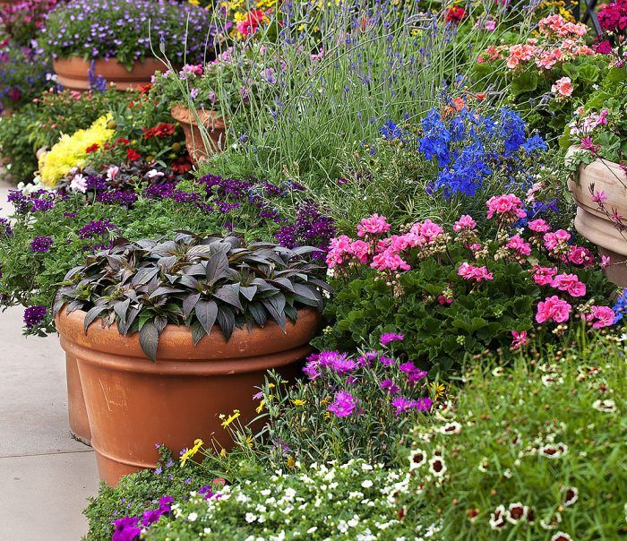 Možno zvažujete chodník pri plote, vydláždenú plochu alebo mini záhon. Priestor v naozaj malej záhrade vyriešite aj takouto výsadbou okrasných rastlín, napríklad letničiek, do rôzne veľkých nádob. Kvety budú odmena za pravidelnú a dôkladnú starostlivosť, nie však celú sezónu.