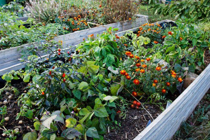 malá záhrada, vyvýšené záhony