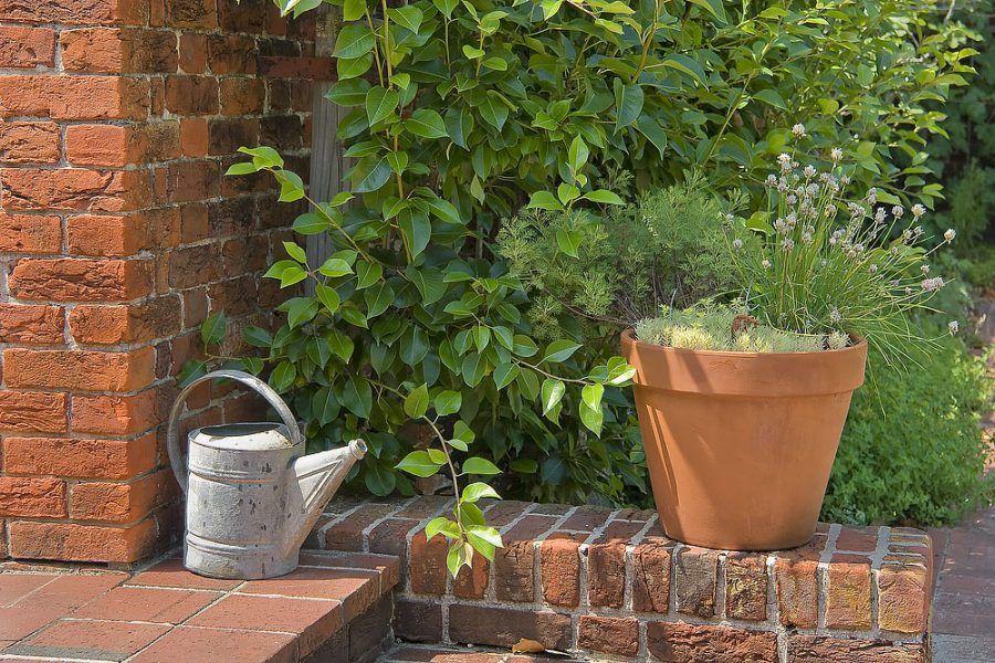 Múriky a múry v záhrade – vieme, ako z nich urobiť šperk