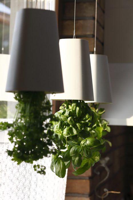 Pestovať rastliny hore nohami je trendové, takto si môžete skrášliť okná nielen bylinkami, ale i okrasnými rastlinami, napríklad orchideami.