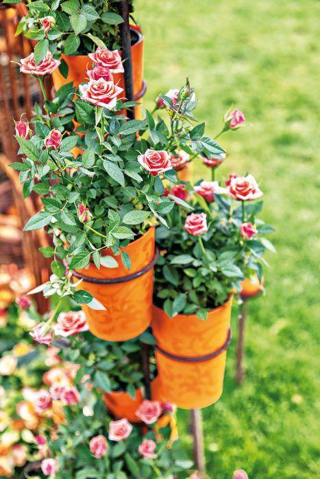 Nový domov pre kvetináče. Aj u vás v kôlni či kdesi vzadu v záhrade drieme stará kovová konštrukcia, ktorá kedysi slúžila na umiestnenie rastlín v interiéri? Vdýchnite jej nový život, ošetrite ju proti hrdzi, doplňte vhodnými kvetináčmi a umiestnite napríklad k plotu. Takto si môžete vysadiť napríklad miniatúrne ruže.