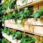 Vegetačnou stenou z paliet sa majiteľ inšpiroval v jednom berlínskom hoteli a rozhodol sa ju použiť aj v tejto prevádzke. Jednotlivé rastliny sú vysadené v menších kvetináčoch.