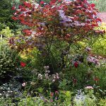 Po revitalizácii hýri záhrada farbami nielen počas leta, ale prakticky celoročne. Nájdete tu cibuľoviny, trvalky i letničky, ako aj starostlivo vybrané stromy a kry. Nechýbajú druhy atraktívne svojimi pekne sfarbenými a tvarovanými listami.