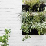 Bylinková záhradka pri kuchyni rastie v nádobách upevnených na stene. Maximálne sa tak využil malý priestor.