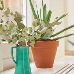 Živé kvety a rastliny zdobia nejeden kút či policu v interiéri.