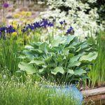 Majiteľ má rád, keď je výsadba v rovnováhe a pôsobí sviežo. Pri výbere rastlín kladie dôraz na štruktúru, tvar a formu listov, v záhrade sa preto nachádza veľa vždyzelených druhov.