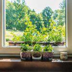 Okrasná záhrada a bylinky sú ďalšou Patríciinou srdcovkou.