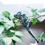 Dobre zamaskovaný najmenší obyvateľ domu – Pascal