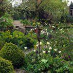 Jar je jediným obdobím v roku, keď sa v záhrade objavujú aj kvety žltej a krémovej farby. Okrem tulipánov lemujú cestu k altánku aj biele narcisy, samorastlík a zlaté iskerníky.