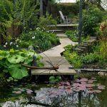 Na mieste dnešného rybníka malo byť pôvodne pokračovanie trávnika, domáci pán ale nakoniec vybudoval vodný prvok, ktorý do záhrady výborne zapadol. Vďaka prirodzene vyvinutému ekosystému s pobrežnými a vodnými rastlinami je voda v ňom krásne číra.