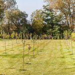 Od záhonov až po riečku siaha tento nádherný mladý sad s najrôznejšími ovocnými odrodami stromčekov. Pôvodná 20-árová záhrada prešla rekonštrukciou od navážky zeminy a ornice cez vybudovanie zavlažovacích a elektrických rozvodov až po vysadenie stromov a vysiatie trávnika.