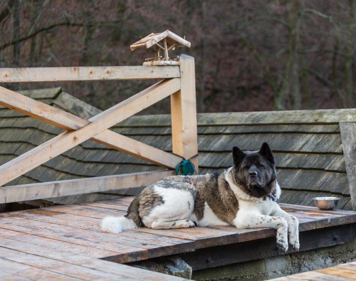 Pes leží na drevenej terase