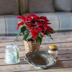 stôl s červenou kytičkou