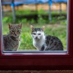 mačky v okne