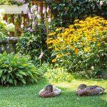 záhrada s indickými bežcami