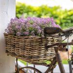 starý bicykel s kvetmi