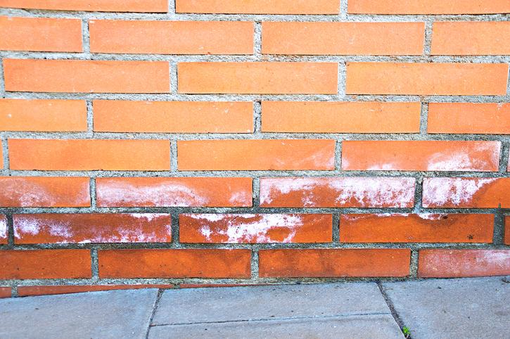 vlhký múr